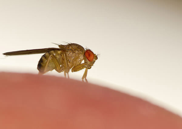 Indoor-Breeding-Fly-4