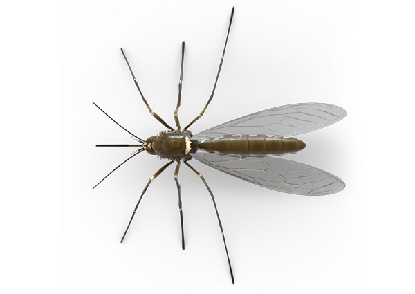 Mosquito-Top